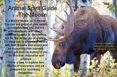 Moose..spirit guide