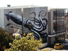 Image result for new zealand squid on wall