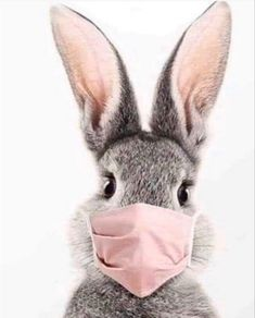 Cute Baby Bunnies, Cute Babies, Animals And Pets, Funny Animals, Lapin Art, Fluffy Cows, Rabbit Art, Bunny Art, Tier Fotos