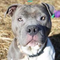 Watauga Humane Society In Boone North Carolina In 2020 Terrier Mix Breeds Pet Adoption Mixed Breed