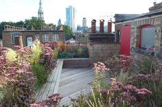 London || Roof terrace with planting in soft pink and russet colours: Sedum 'Matrona', Stipa tenuissima, Aquilegias, Penstemon 'Garnet', Linaria purpurea, Achillea Cerise Queen, Gaura lindheimeri