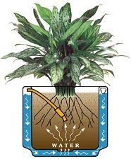 The manual Controlled Watering System