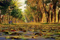SUST Kilo Road @Shahjalal University of Science & Technology, Sylhet