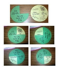 Life Cycle of a FROG!