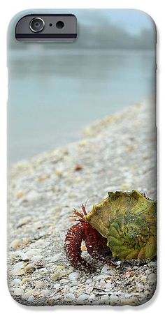 Hermit crab cell phone cases. iPhone and Galaxy
