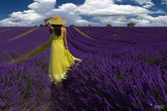 Photo  The colors of Provence by sandra160173 on 500px