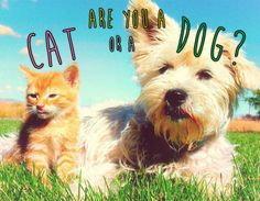 Where does your personality lie in the age old debate of cat vs. dog?