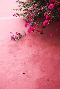 Pink / Via Lejardindeclaire