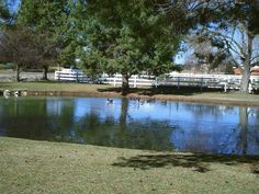 PT BOISE IDAHO. A POND WITH GEESE IN IT. MARCH 2016