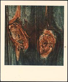 Walker Evans, 1974. Polaroid.