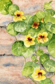 Nasturtiums  watercolor