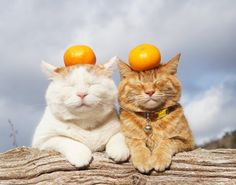 This is a new combination of the funniest cat memes and Picdumps. While scrolling down the pages, you can read the fun facts about cats. Animals And Pets, Baby Animals, Funny Animals, Cute Animals, I Love Cats, Crazy Cats, Cool Cats, Costume Chat, Cat Aesthetic