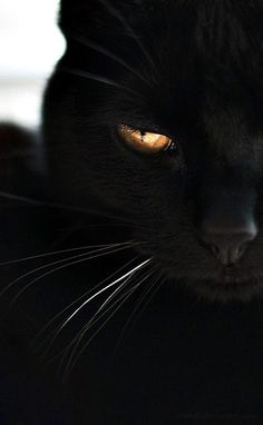 Rein schwarze Katzen ♥ Xx