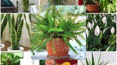 Evin havasını temizleyen bitkiler - Canım Anne Anne, Plants, Plant, Planets