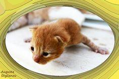 New Born Kitten  Augusta Stylianou