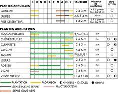 Les plantes grimpantes : calendrier de semis et de floraison
