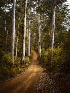 Road through the Boranup Forest, Margaret River Region - Western Australia