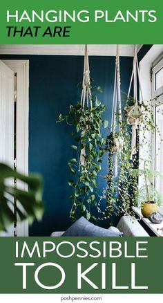 Beginner plant lovers, this article is for you! Check out these 9 gorgeous indoor hanging plants that you can add to your home today and not even worry about killing them! No previous plant experience required ;) Super useful article, pin it for later! Best Indoor Plants, Outdoor Plants, Outdoor Gardens, Garden Plants, Ivy Plant Indoor, Air Plants, Indoor Succulents, Vine House Plants, Indoor Hanging Plants