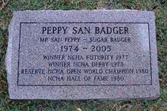 Peppy San Badger's grave site on king ranch. R.I.P 1974-2005. (my One Badger just turned 2yr. old in April 2005)