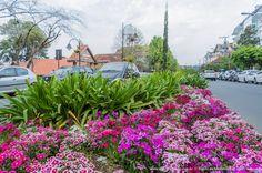 Canteiro central florido na Primavera em Gramado.