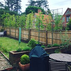 Some new pleached #trees planted yesterday to give some #privacy to the garden #hedgeforce