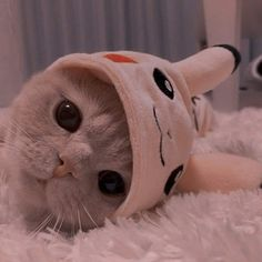 Funny Cute Cats, Cute Baby Cats, Cute Little Animals, Cute Cats And Kittens, Cute Funny Animals, Kittens Cutest, Cute Dogs, Cute Babies, Tiny Cats