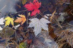 "Search ""autumn rain"" Free Photos & Stock Images - Visual Hunt"