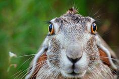 6 Tips to Taking Great Wildlife Photos