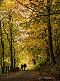 A lovely #Autumn shot taken by Andy Beck Images in nearby #MiddletoninTeesdale.
