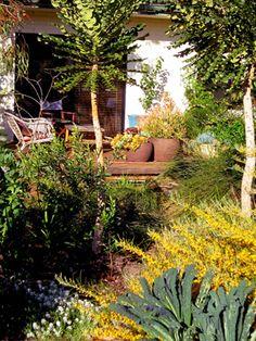 26 Best Perth WA Native Garden Ideas images | Native ...