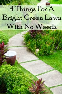 These are all natural ways to have a green lawn with no weeds