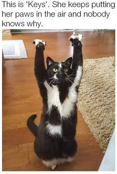 Cats 🐱 - Cat, cat memes, cats funny, cats and kittens and cats cute. Animals And Pets, Funny Animals, Cute Animals, Animal Gato, Gatos Cats, Cat Stands, Photo Chat, Cute Kittens, Tier Fotos