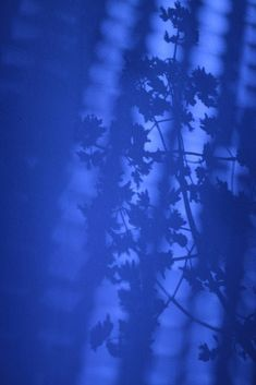 Blue Aesthetic Dark, Rainbow Aesthetic, Aesthetic Colors, Aesthetic Images, Aesthetic Wallpapers, Aesthetic Vintage, Blue Wallpaper Iphone, Blue Wallpapers, Photo Wall Collage