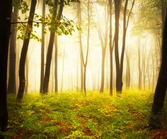 A magical forest...