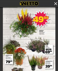 Höstväxter Netto 6 Pack, October, Autumn, Plants, Home Decor, Decoration Home, Fall Season, Room Decor, Fall