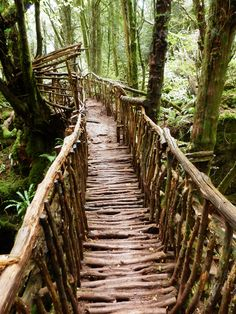 Wooden Bridge, Puzzlewood, Forest of Dean, Gloucestershire (by photphobia)