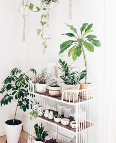 Awe Inspiring Indoor Gardening An Environment Friendly Thing Ideas. Exhilarating Indoor Gardening An Environment Friendly Thing Ideas. Diy Interior, Indoor Garden, Indoor Plants, Plants Are Friends, Green Life, Cool Plants, Amazing Gardens, Houseplants, Planting Flowers