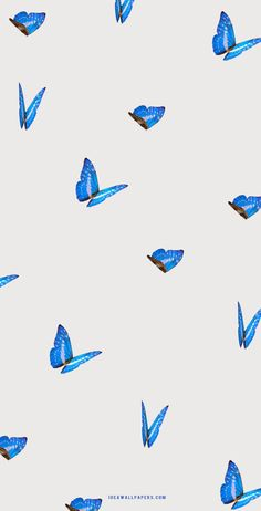 Blue Butterflies on grey background - Idea Wallpapers , iPhone Wallpapers,Color Schemes Marble Iphone Wallpaper, Iphone Wallpaper Fall, Apple Watch Wallpaper, Iphone Background Wallpaper, Iphone Wallpapers, Blue Butterfly Wallpaper, Pineapple Wallpaper, Butterfly Background, Bad Girl Wallpaper