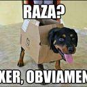 """Memes y más for Spanish teachers/learners. Para compartir, haz clik en """"Submit"""""""
