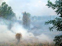 Palm oil indonesia economy