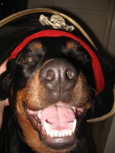 My happy pirate! Smiling dog.