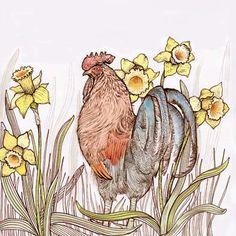TW72 - Cockerel in Daffodils