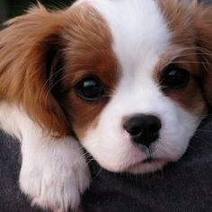Imagem de dog, cute, and puppy