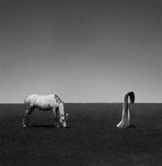 Noell S. Oszvald #fotografia #arte #criniera #biancoenero #nosense
