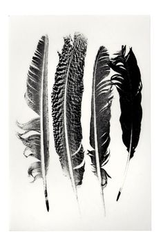 Feather Transfers for use on ceramics glass wood paper.
