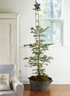 Oh my...a perfect Christmas tree for me.  I love all of it, especially the moss…