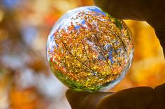 Fall Marble by Reiffhaus (Steppin It Up!!), via Flickr