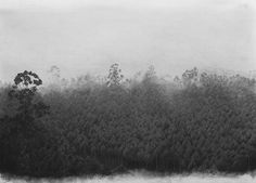 Michael Amery - Trees, by man - 8 Charcoal on paper. 1000 x 700mm