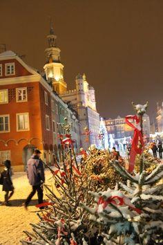 Na pierwszym planie ośnieżona choinka, w tle ośnieżony Stary Rynek.