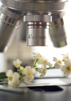 A microscope pointed at a bunch of flowers : Photo